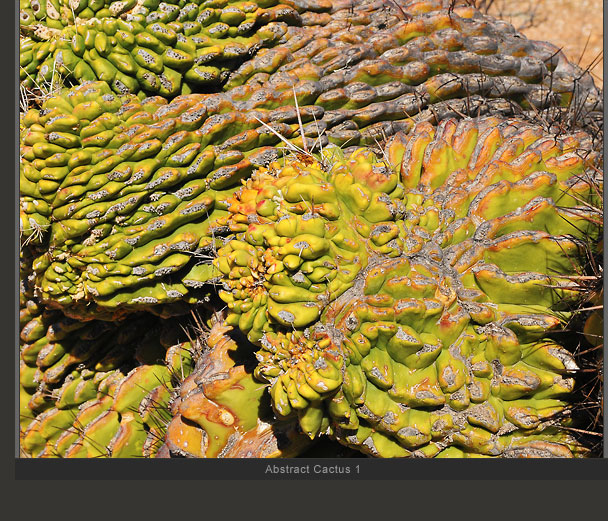 Abstract Cactus 1