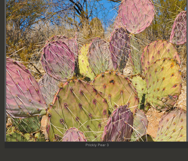Prickly Pear 3
